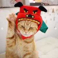 3COINS(スリコ)の犬猫用「お正月かぶりもの」で年賀状を作ろう♡