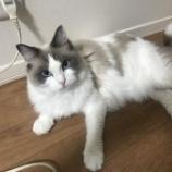 『猫』の画像