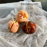『アボカド盆栽チャレンジ』の画像
