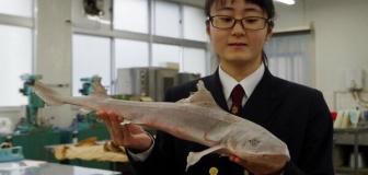 【京都】女子高生(17)がサメバーガーを開発し水産庁長官賞 敬遠されていた食材、臭いを解消