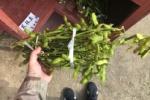 無人販売所で地元産の黒枝豆もっさり300円であったので買って帰って煮てみた!〜この旨さは地元産野菜の底力だ!〜