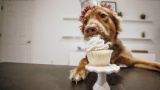 【悲報】ワイ家のクリスマスケーキの値段がおかしいんやが
