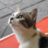 『猫が見守る火鍋食堂 〜 @中国重慶 〜』の画像