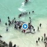『皆で力を合わせて、子クジラを救出♡』の画像