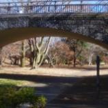 『12月の国営昭和記念公園Ⅱ;立川市』の画像