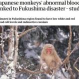 『福島のお猿さんたちに異変』の画像