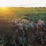 『野原はうたう 3……あきのひ』の画像
