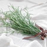 『天然ハーブの香りで爽やかな空間 & 目に優しいグリーンで癒し効果』の画像