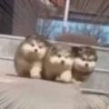 3匹の丸っこい子イヌが走ってきた。もふもふ、ポヨンポヨン♪ → こうなっちゃう…