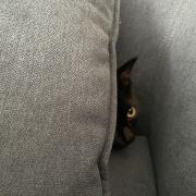 我が家の黒猫2匹の見分けがつかなかった写真など