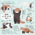 レッサーパンダって可愛いよね?