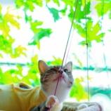 『猫も人も喜ぶゴーヤカーテン』の画像
