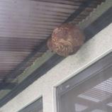 『蜂の巣』の画像