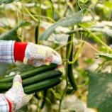 『農業を救うべきなのではなく、農業が日本を救う。「だから、ぼくは農家をスターにする」 という未来予測』の画像