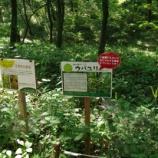 『7月の「ウバユリ」;都立野山北・六道山公園』の画像