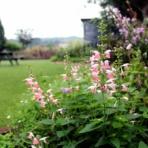 miraiの庭 つれづれに