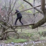【動画】中国、村民のため? 自ら橋になった川の両岸の二本の楓の木が話題に [海外]