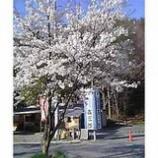 『春まだ』の画像