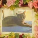那珂市の愛猫おはぎちゃんの個別火葬【ペット火葬・霊園・那珂市】