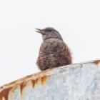 『投稿:BORG45EDIIによる野鳥&BORG情報 2020/07/30』の画像
