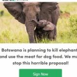 『緊急署名お願い:貴重なアフリカゾウをドッグフードにしてはいけない!』の画像
