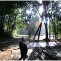 紅葉と落ち葉 群馬の森公園 Takasaki Watanuki