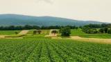 ワイ農家、コロナに怯えながら営農活動続ける