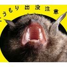 『野生動物は歯が命』の画像