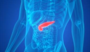 【来たっ!】iPS細胞を使いブタの体内で人間の膵臓を作成 明治大 年度内にも実験開始へ