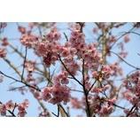 『春』の画像