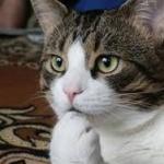 ネコは飼い主を殺そうと機会を伺っているらしい←むしろ本望ノシ