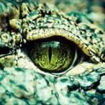 原始爬虫類の腹に胎児がいる化石を中国で発見wwww