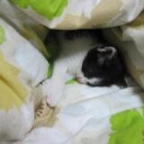 [子猫かわいい動画] 子猫が写真撮影中にうたた寝のサムネイル