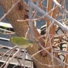 『【Canon G7X Mark2】Tvモード(シャッタースピードを決めて撮る)で野鳥を撮りました。』の画像