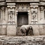 『動物園の在り方:ブエノスアイレス動物園閉鎖』の画像