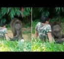 野生の群れに馴染めなかった子象、飼育員の膝の上で安心して眠る
