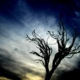 『【怨念】彼女の恨みは亡くなった後も続いていた「真相は薮の中」』の画像