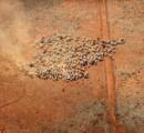 【画像】豪州にある地球最大の牧場が390億円で売りに出される