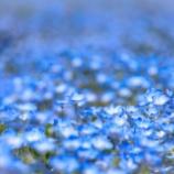 『すごい!青の効用』の画像
