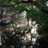 『(2019年 南インド) バックウォーター(11)』の画像