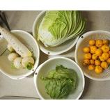 『畑で採れた白菜、ダイコンで、鍋をする。』の画像