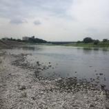 『多摩川』の画像