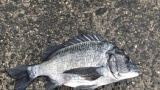【朗報】ワイ、大雨の中で魚を釣り上げる(※画像あり)