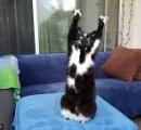 【画像】カリフォルニアの猫、カメラの前で「降参」する