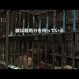 『【24時間テレビ】災害救助犬「夢之丞(ゆめのすけ)」殺傷処分寸前から命を救われた捨て犬を吉田羊が訪れる【動画】』の画像