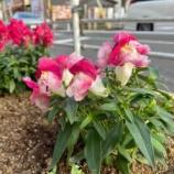 『【朝のご挨拶】新型コロナで休止を余儀なくされていた戸田市の各種サークル活動も、感染防止対策をしながら再開しました。それぞれの年代に応じて輝ける活動があると感じています。』の画像