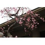 『春の気配』の画像