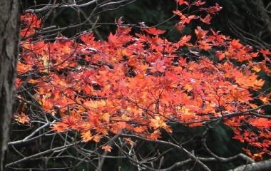 『初冬の広島県民の森 Nov.16, 2014』の画像
