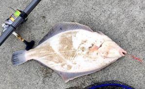 東北の海で大物を釣り上げたい