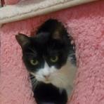 ~中央区 飼い主のいないネコ達~:猫の里親募集と譲渡会